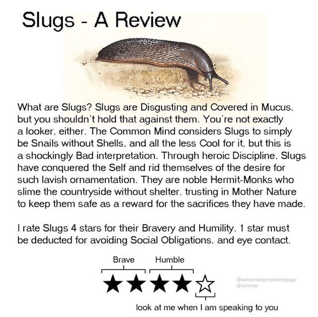 Text - Slugs - A Review What are Slugs? Slugs are Disgusting and Covered in Mucus, but you shouldn't hold that against them. You're not exactly a looker, either. The Common Mind considers Slugs to simply be Snails without Shells, and all the less Cool for it, but this is a shockingly Bad interpretation. Through heroic Discipline, Slugs have conquered the Self and rid themselves of the desire for such lavish ornamentation. They are noble Hermit-Monks who slime the countryside without shelter, tru