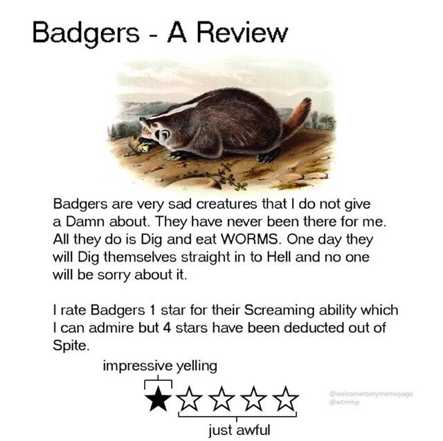 Adaptation - Badgers - A Review Badgers are very sad creatures that I do not give a Damn about. They have never been there for me. All they do is Dig and eat WORMS. One day they will Dig themselves straight in to Hell and no one will be sorry about it. I rate Badgers 1 star for their Screaming ability which I can admire but 4 stars have been deducted out of Spite. impressive yelling @welcometomymemepage @wtmmp just awful