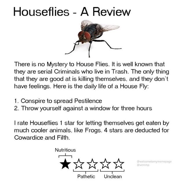 Insect - Houseflies - A Review There is no Mystery to House Flies. It is well known that they are serial Criminals who live in Trash. The only thing that they are good at is killing themselves, and they don't have feelings. Here is the daily life of a House Fly: 1. Conspire to spread Pestilence 2. Throw yourself against a window for three hours I rate Houseflies 1 star for letting themselves get eaten by much cooler animals, like Frogs. 4 stars are deducted for Cowardice and Filth. Nutritious Ow