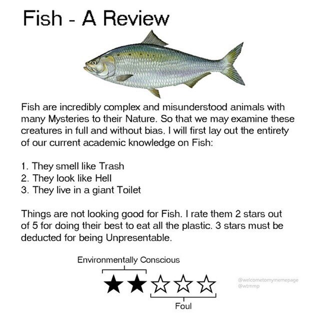 Fish - Fish - A Review Fish are incredibly complex and misunderstood animals with many Mysteries to their Nature. So that we may examine these creatures in full and without bias. I will first lay out the entirety of our current academic knowledge on Fish: 1. They smell like Trash 2. They look like Hell 3. They live in a giant Toilet Things are not looking good for Fish. I rate them 2 stars out of 5 for doing their best to eat all the plastic. 3 stars must be deducted for being Unpresentable. Env