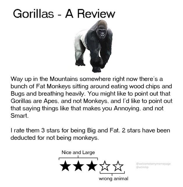 Text - Gorillas - A Review Way up in the Mountains somewhere right now there's a bunch of Fat Monkeys sitting around eating wood chips and Bugs and breathing heavily. You might like to point out that Gorillas are Apes, and not Monkeys, and l'd like to point out that saying things like that makes you Annoying, and not Smart. I rate them 3 stars for being Big and Fat. 2 stars have been deducted for not being monkeys. Nice and Large ***** @welcometomymemepage @wtmmp wrong animal