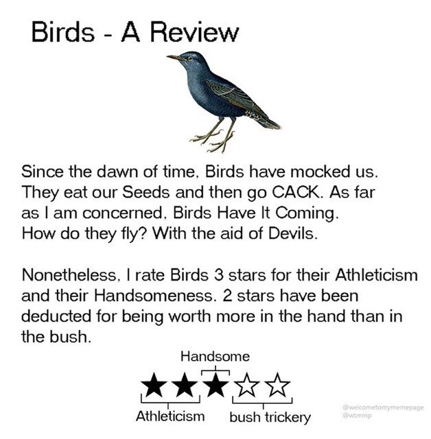 Text - Birds - A Review Since the dawn of time, Birds have mocked us. They eat our Seeds and then go CACK. As far as I am concerned, Birds Have It Coming. How do they fly? With the aid of Devils. Nonetheless, I rate Birds 3 stars for their Athleticism and their Handsomeness. 2 stars have been deducted for being worth more in the hand than in the bush. Handsome @welcometomymemepage @wtrmmp Athleticism bush trickery