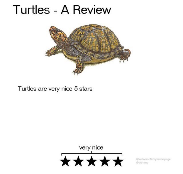 Turtle - Turtles - A Review Turtles are very nice 5 stars very nice @welcometomymemepage @wtrnmp