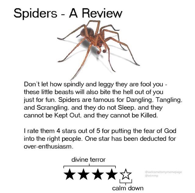 Text - Spiders - A Review Don't let how spindly and leggy they are fool you - these little beasts will also bite the hell out of you just for fun. Spiders are famous for Dangling. Tangling. and Scrangling. and they do not Sleep, and they cannot be Kept Out, and they cannot be Killed. I rate them 4 stars out of 5 for putting the fear of God into the right people. One star has been deducted for over-enthusiasm. divine terror ★★★★☆ @welcometomymemepage @wtmmp calm down