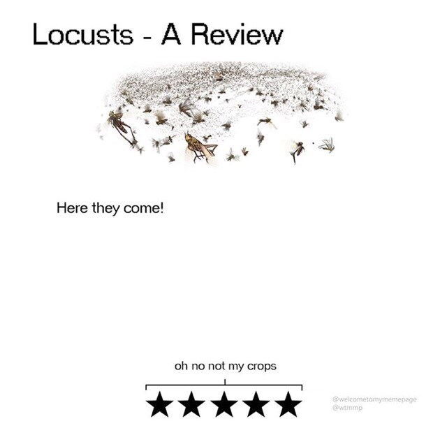 Text - Locusts - A Review Here they come! oh no not my crops @welcometomymemepage @wtmmp