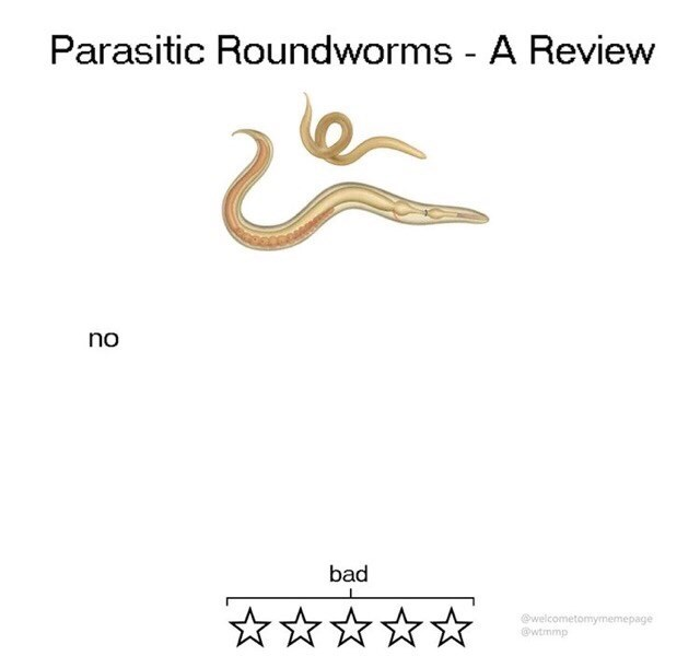 Text - Parasitic Roundworms - A Review no bad @welcometomymemepage @wtmmp