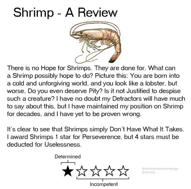 Text - Shrimp - A Review There is no Hope for Shrimps. They are done for. What can a Shrimp possibly hope to do? Picture this: You are born into a cold and unforgiving world. and you look like a lobster, but worse, Do you even deserve Pity? Is it not Justified to despise such a creature? I have no doubt my Detractors will have much to say about this, but I have maintained my position on Shrimp for decades, and I have yet to be proven wrong. It's clear to see that Shrimps simply Don't Have What I