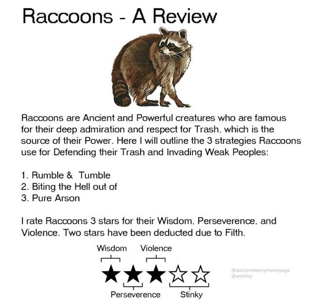 Wildlife - Raccoons - A Review Raccoons are Ancient and Powerful creatures who are famous for their deep admiration and respect for Trash, which is the source of their Power. Here I will outline the 3 strategies Raccoons use for Defending their Trash and Invading Weak Peoples: 1. Rumble & Tumble 2. Biting the Hell out of 3. Pure Arson I rate Raccoons 3 stars for their Wisdom, Perseverence, and Violence. Two stars have been deducted due to Filth. Violence Wisdom **★☆☆ @welcometomymemepage @wtmmp