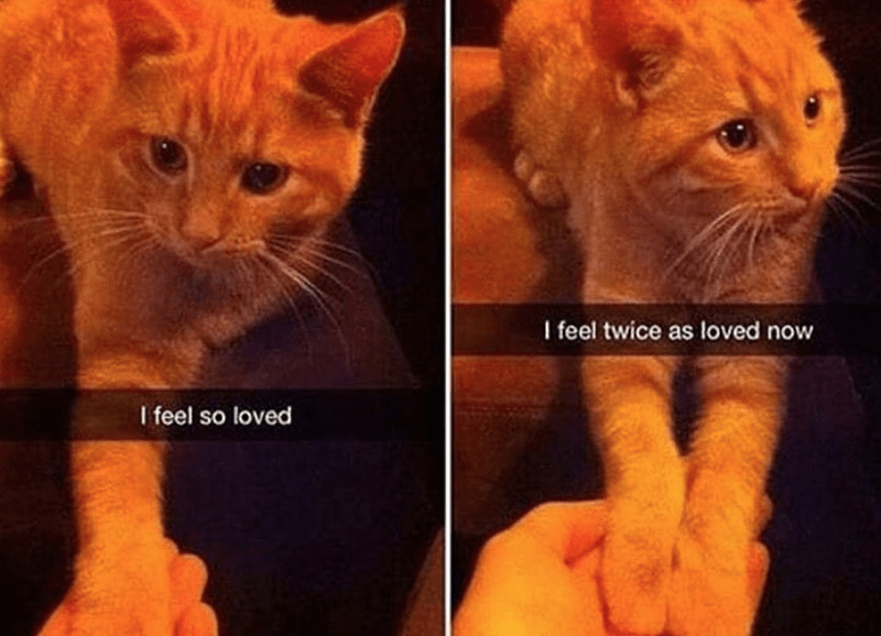 Cat - I feel twice as loved now I feel so loved