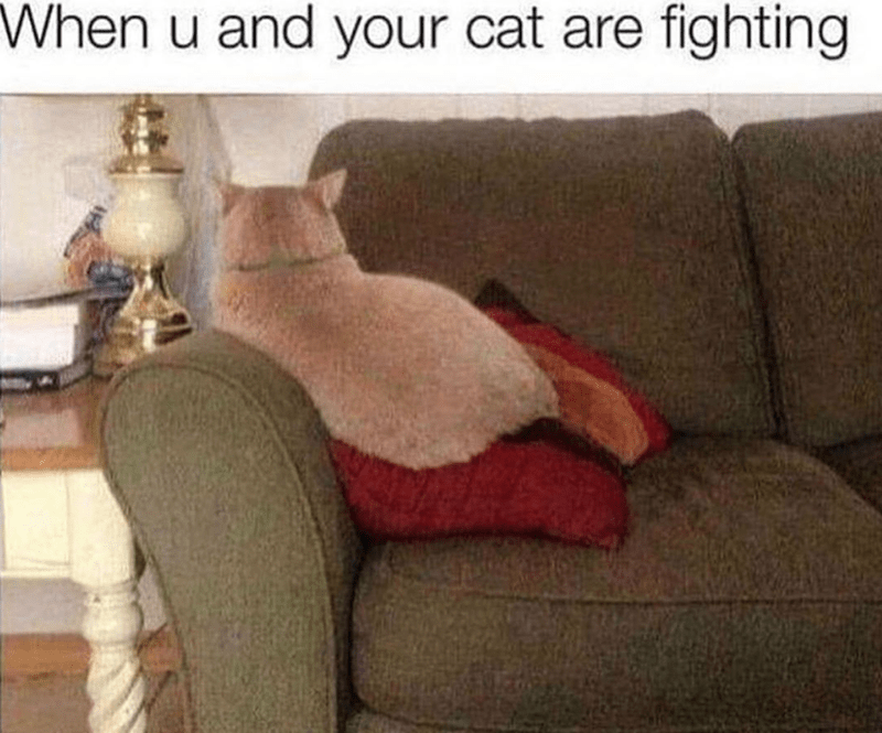 Furniture - When u and your cat are fighting