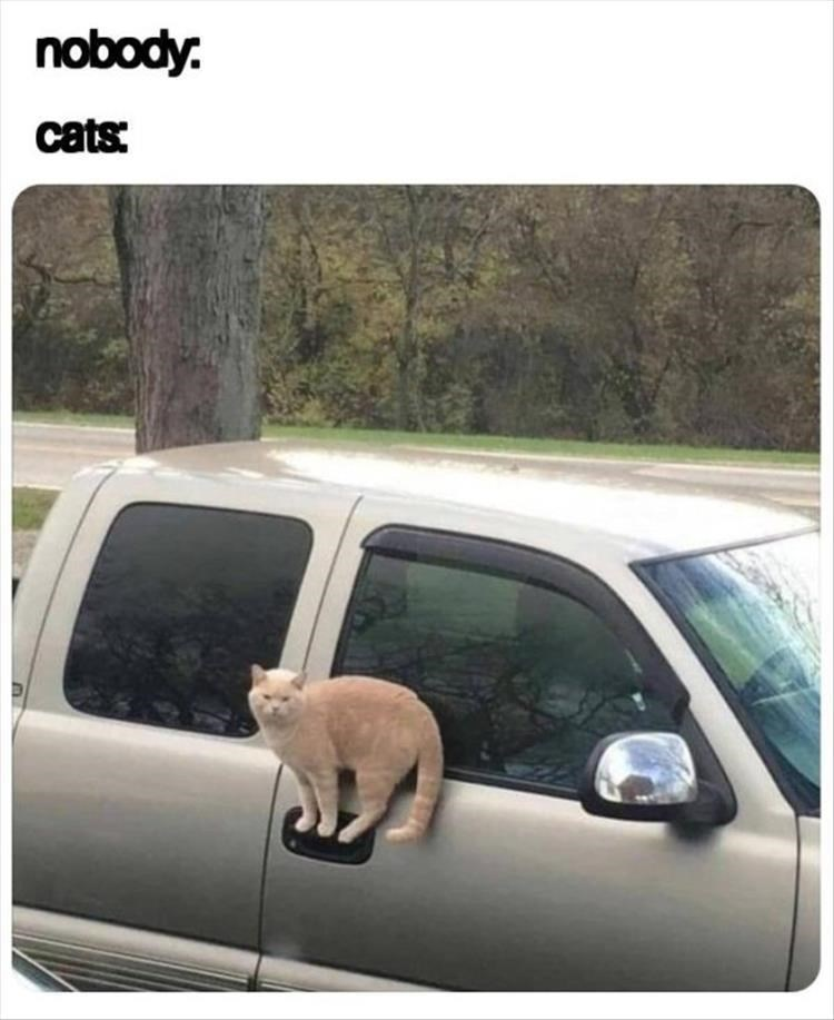 Vehicle door - nobody. cats: