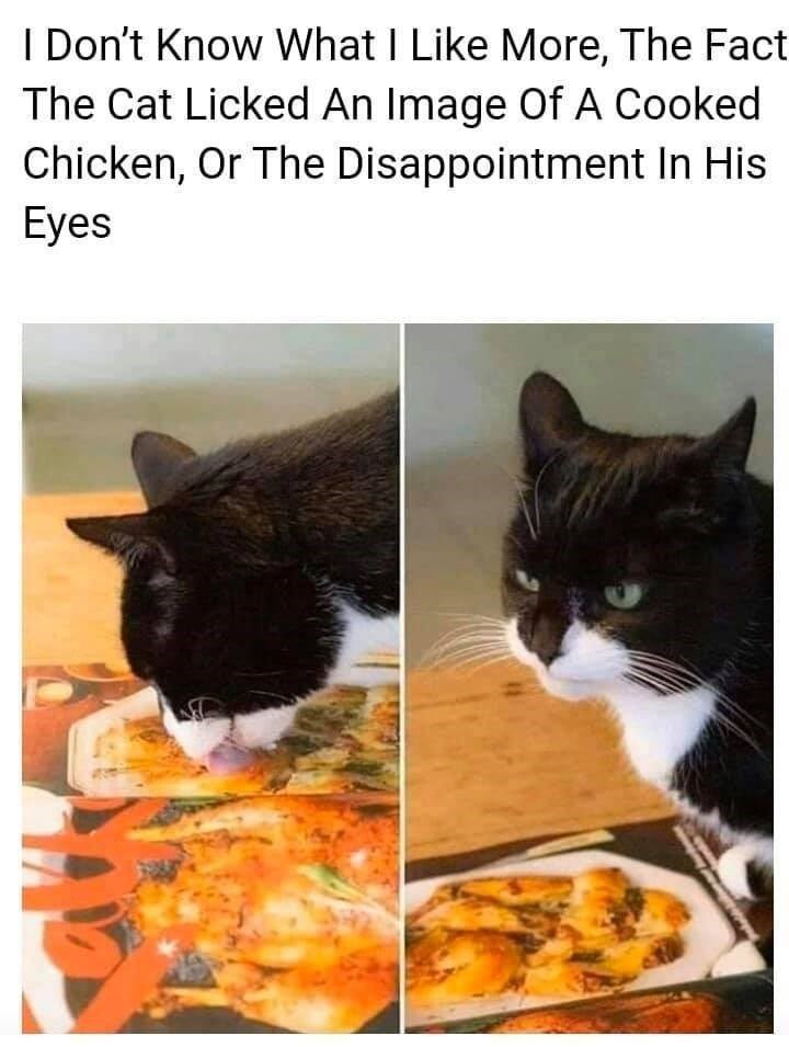 two pics showing a black and white cat licking a box with an image of food printed on it then looking up with an annoyed expression: i don't know what i like more, the fact the cat licked an image of a cooked chicken or the disappointment in his eyes