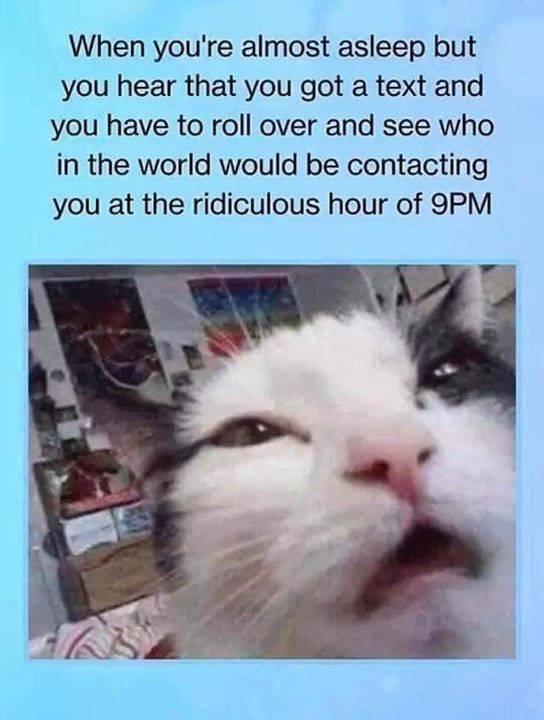 cat memes - 9424555520