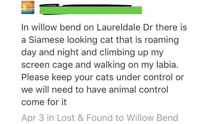 Text - In willow bend on Laureldale Dr there is a Siamese looking cat that is roaming day and night and climbing up my screen cage and walking on my labia. Please keep your cats under control or we will need to have animal control come for it Apr 3 in Lost & Found to Willow Bend