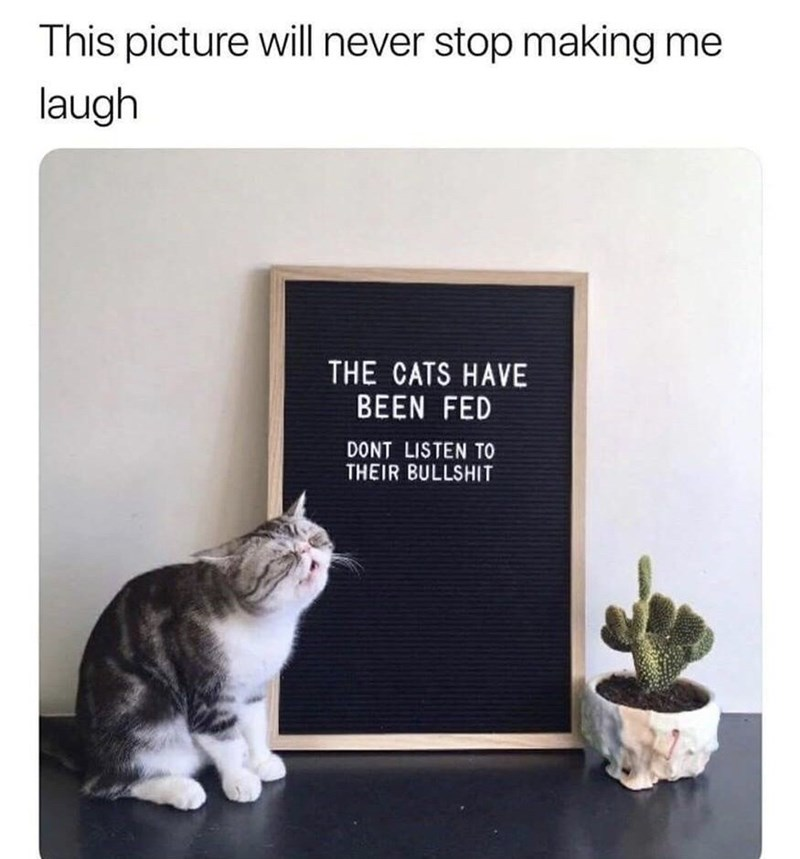 Cat - This picture will never stop making me laugh THE CATS HAVE BEEN FED DONT LISTEN TO THEIR BULLSHIT