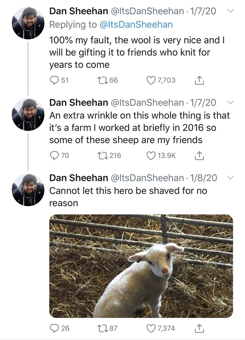 Text - Dan Sheehan @ltsDanSheehan 1/7/20 Replying to @ltsDanSheehan 100% my fault, the wool is very nice and I will be gifting it to friends who knit for years to come O 51 2766 7,703 Dan Sheehan @ltsDanSheehan · 1/7/20 An extra wrinkle on this whole thing is that it's a farm I worked at briefly in 2016 so some of these sheep are my friends 27 216 13.9K 70 Dan Sheehan @ltsDanSheehan · 1/8/20 Cannot let this hero be shaved for no reason ♡ 7,374 2787 26