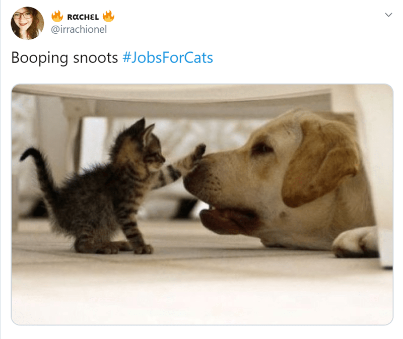 funny cats cat tweets cat jobs animal tweets Cats animals - 9425157