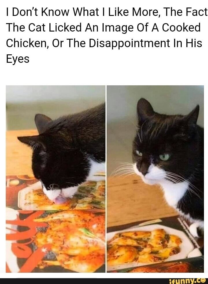 Cat - I Don't Know What I Like More, The Fact The Cat Licked An Image Of A Cooked Chicken, Or The Disappointment In His Eyes ifunny.co