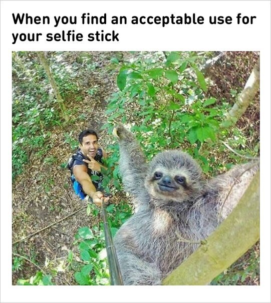 Three-toed sloth - When you find an acceptable use for your selfie stick