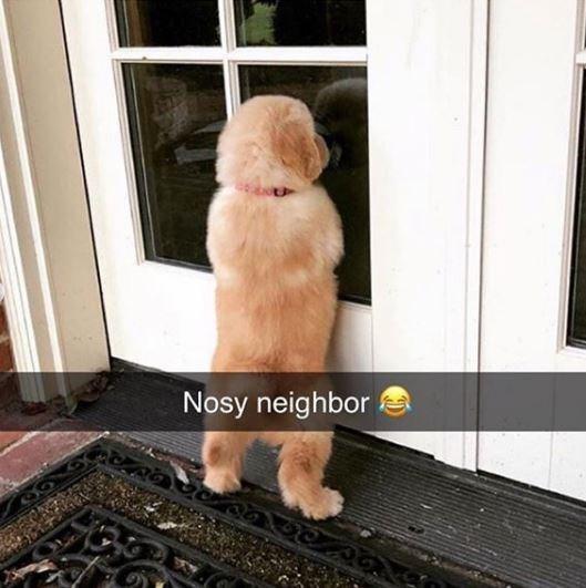 Dog - Nosy neighbor
