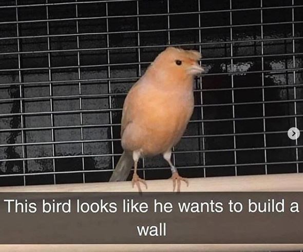 Bird - This bird looks like he wants to build a wall