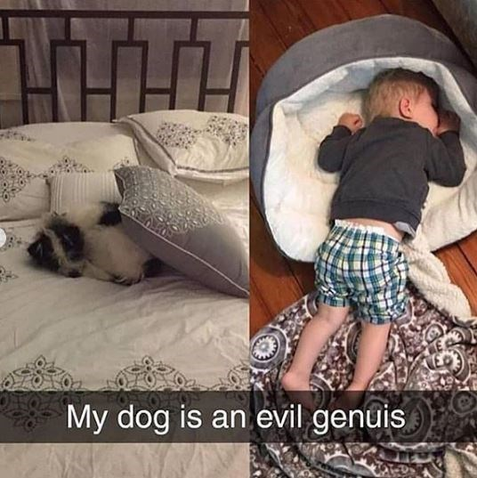 Child - My dog is an evil genuis