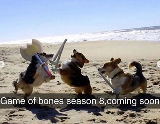Dog - Game of bones season 8,coming soon