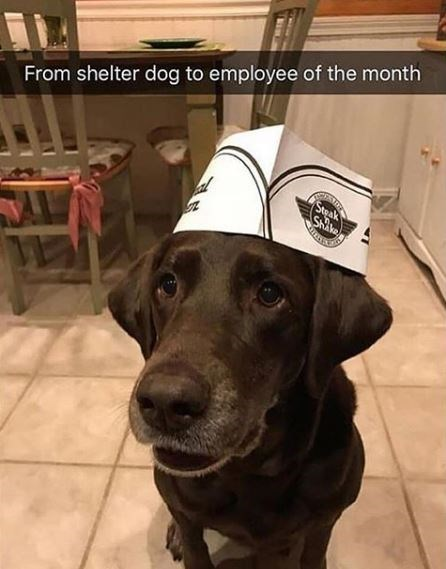 Dog - From shelter dog to employee of the month Steak Shike