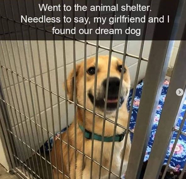 Dog breed - Went to the animal shelter. Needless to say, my girlfriend and I found our dream dog