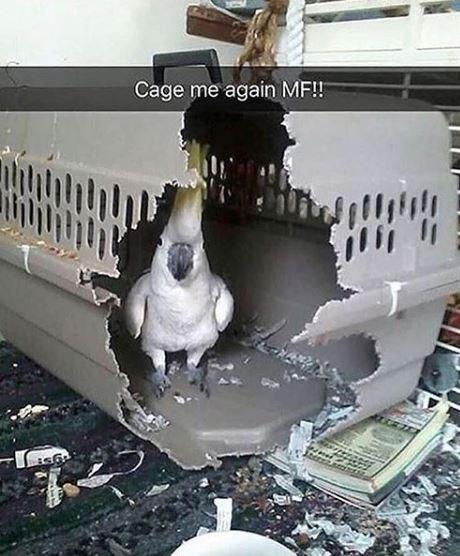 Cage me again MF!!