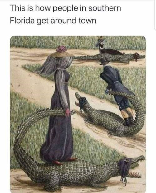 Organism - This is how people in southern Florida get around town