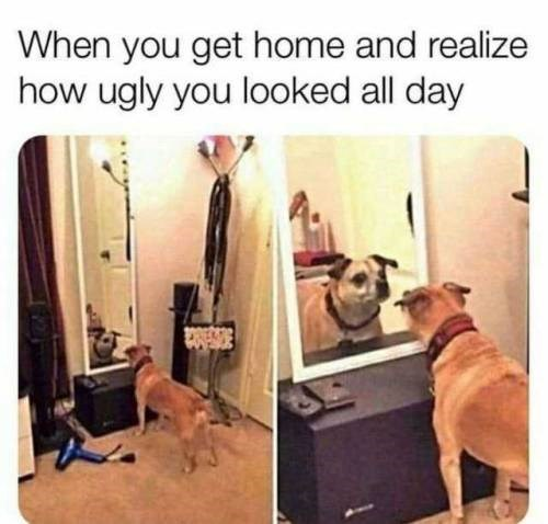 Dog - When you get home and realize how ugly you looked all day