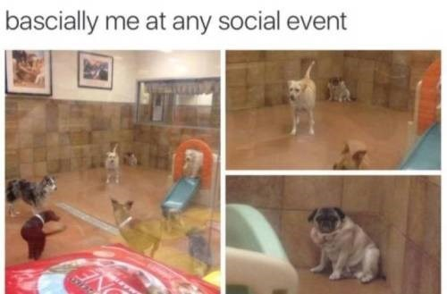 Dog breed - bascially me at any social event