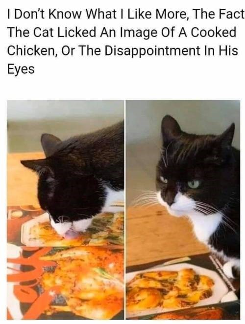 Cat - I Don't Know What I Like More, The Fact The Cat Licked An Image Of A Cooked Chicken, Or The Disappointment In His Eyes