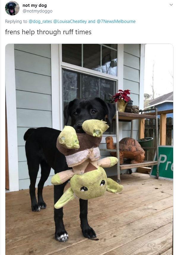 Snapshot - not my dog @notmydoggo Replying to @dog_rates @LouisaCheatley and @7NewsMelbourne frens help through ruff times Pr