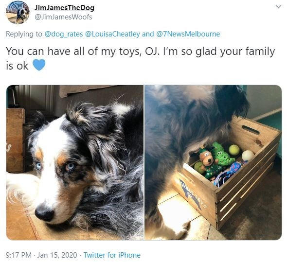Canidae - JimJamesTheDog @JimJamesWoofs Replying to @dog_rates @LouisaCheatley and @7NewsMelbourne You can have all of my toys, OJ. I'm so glad your family is ok 9:17 PM - Jan 15, 2020 - Twitter for iPhone