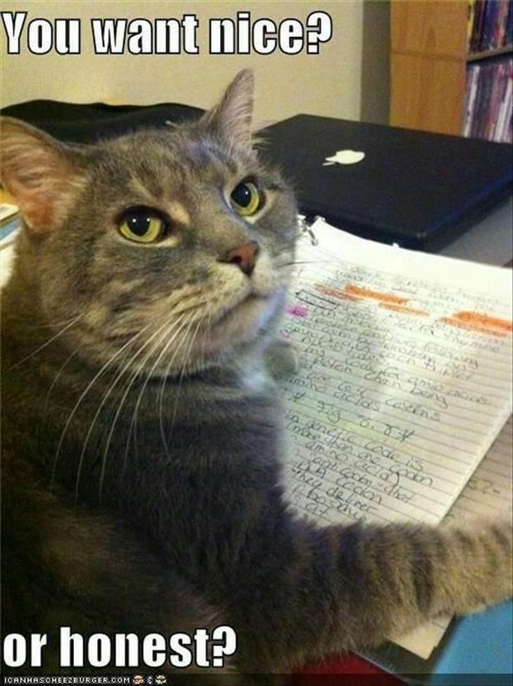 you want nice or honest? cat looking back from a paper covered with handwriting with a judgmental expression