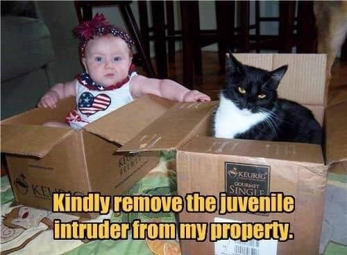 kindly remove the juvenile intruder from my property. cat and baby in cardboard boxes. cat looks unimpressed.