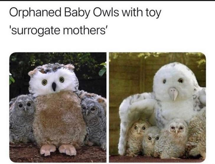 aww right in the feels owls Owl - 9426063616