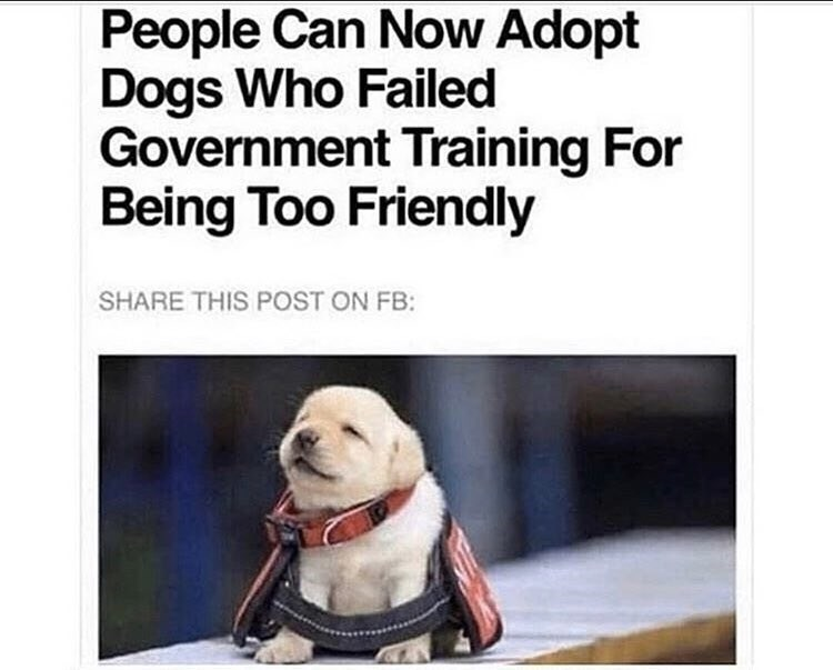 Dog - People Can Now Adopt Dogs Who Failed Government Training For Being Too Friendly SHARE THIS POST ON FB: