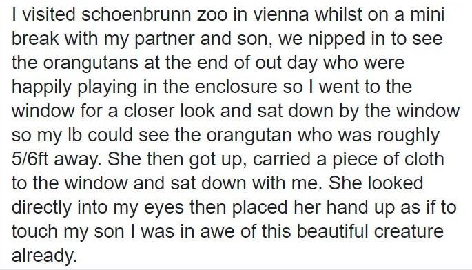 Text - I visited schoenbrunn zoo in vienna whilst on a mini break with my partner and son, we nipped in to see the orangutans at the end of out day who were happily playing in the enclosure so I went to the window for a closer look and sat down by the window so my Ib could see the orangutan who was roughly 5/6ft away. She then got up, carried a piece of cloth to the window and sat down with me. She looked directly into my eyes then placed her hand up as if to touch my son I was in awe of this be