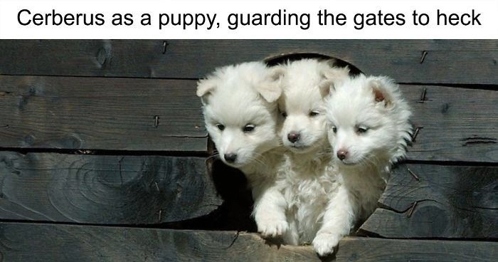 Mammal - Cerberus as a puppy, guarding the gates to heck