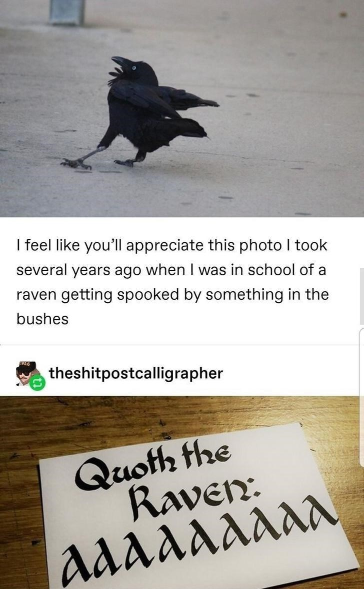 Text - I feel like you'll appreciate this photo I took several years ago when I was in school of a raven getting spooked by something in the bushes WAG theshitpostcalligrapher Quoth the Raven: aaaaaaaa