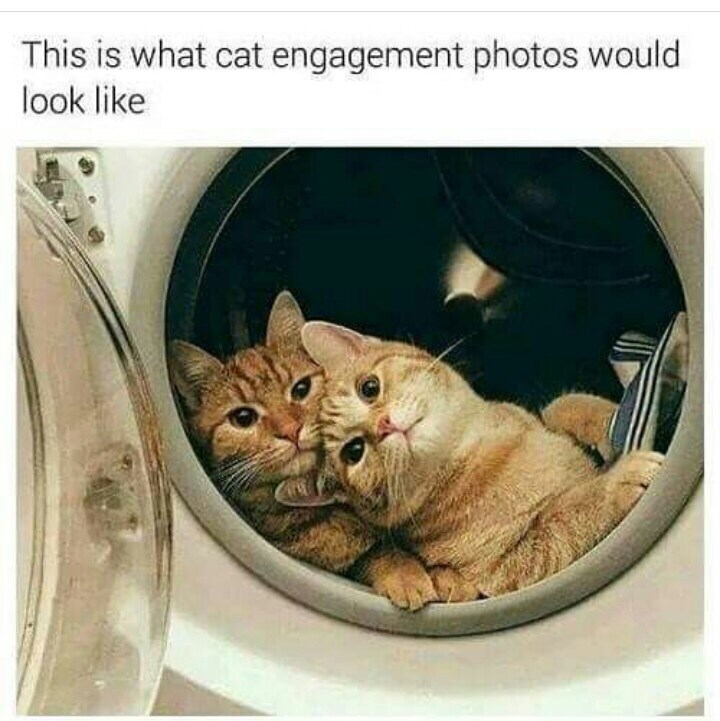 Text - Cat - This is what cat engagement photos would look like