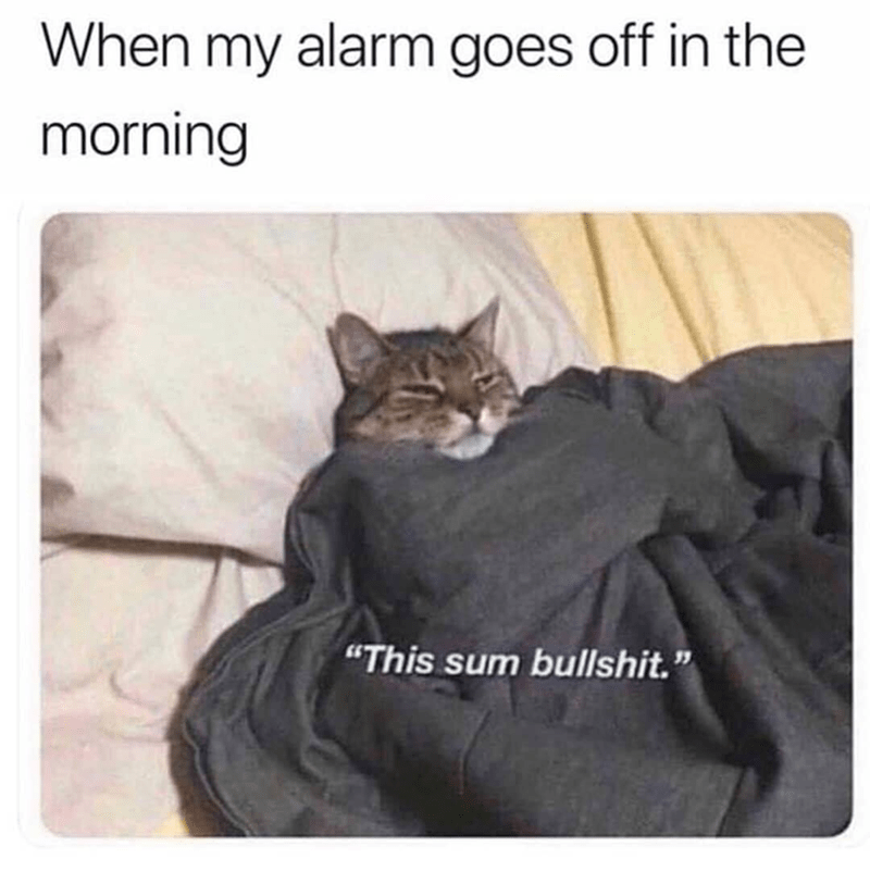 "Text - Cat - When my alarm goes off in the morning ""This sum bullshit."""