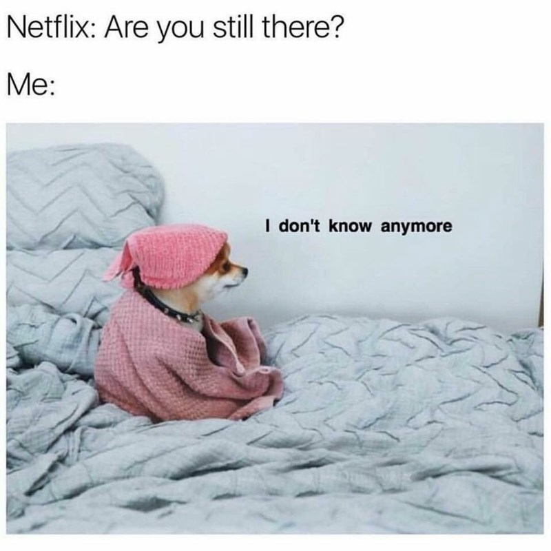 Text - Text - Netflix: Are you still there? Me: I don't know anymore