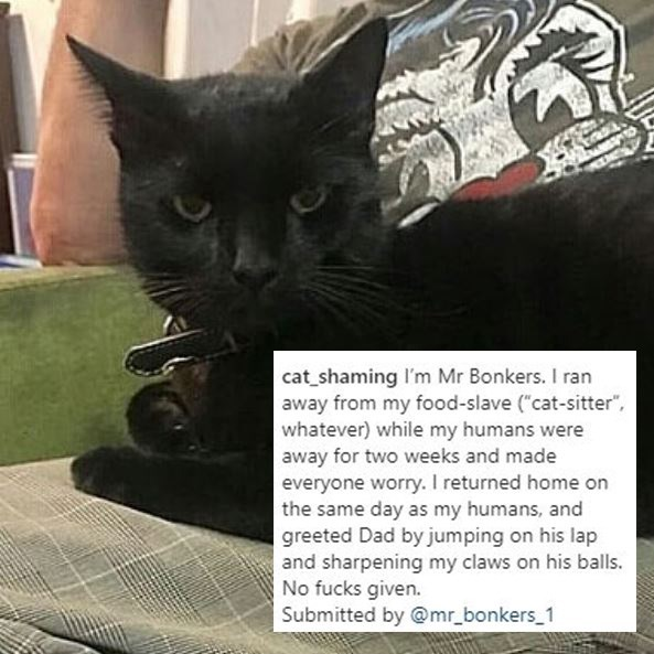 """Cat - cat_shaming Il'm Mr Bonkers. I ran away from my food-slave (""""cat-sitter"""", whatever) while my humans were away for two weeks and made everyone worry. I returned home on the same day as my humans, and greeted Dad by jumping on his lap and sharpening my claws on his balls. No fucks given. Submitted by @mr_bonkers_1"""