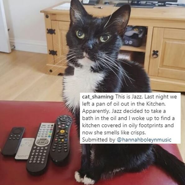 Cat - cat_shaming This is Jazz. Last night we left a pan of oil out in the Kitchen. Apparently, Jazz decided to take a bath in the oil and I woke up to find a kitchen covered in oily footprints and now she smells like crisps. Submitted by @hannahboleynmusic 20