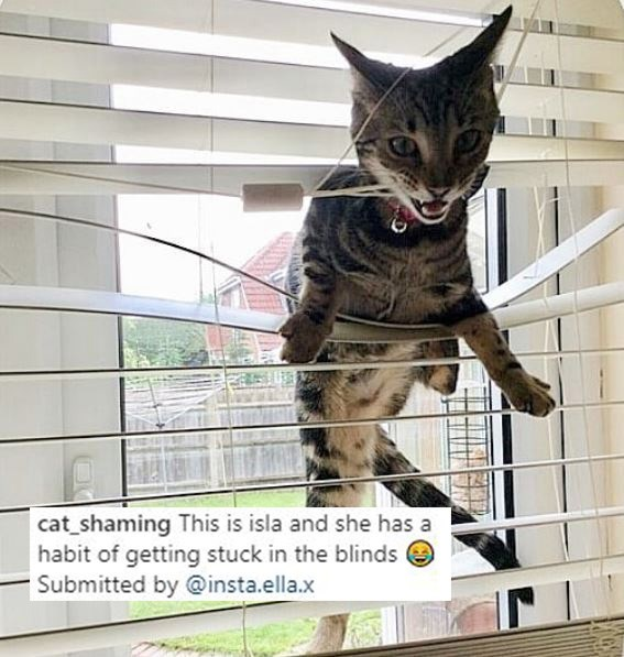 Cat - cat_shaming This is isla and she has a habit of getting stuck in the blinds e Submitted by @insta.ella.x