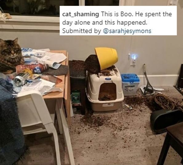 Chair - cat_shaming This is Boo. He spent the day alone and this happened. Submitted by @sarahjesymons LAT